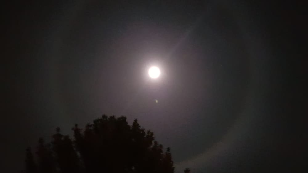 Halo-Mond sorgt für Aufsehen
