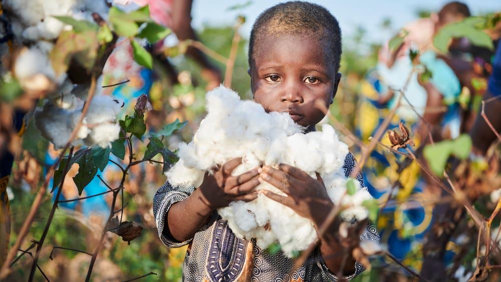 Schweizer Baumwoll-Firmen mitverantwortlich für Kinderarbeit
