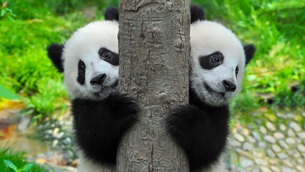Nach dem Skandal treten Dutzende Mitglieder aus dem WWF aus
