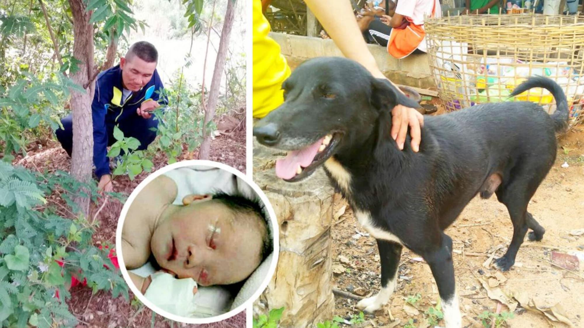 Dreibeiniger Held in Thailand: Behinderter Hund rettet vergrabenes Baby