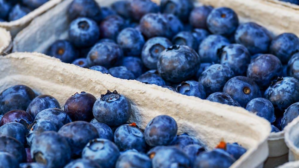 Wie gesund sind Heidelbeeren? Blaubeeren als Superfood – Blick