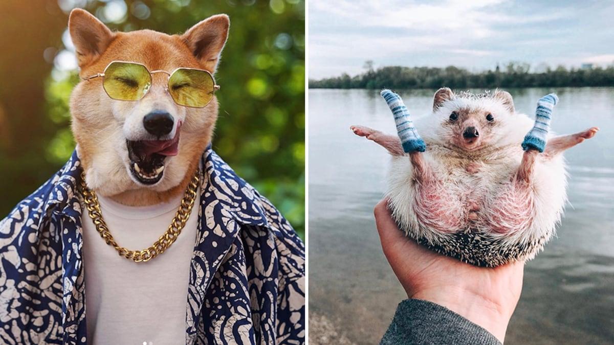 Petfluencer: Die erfolgreichsten Tiere auf Instagram - Blick