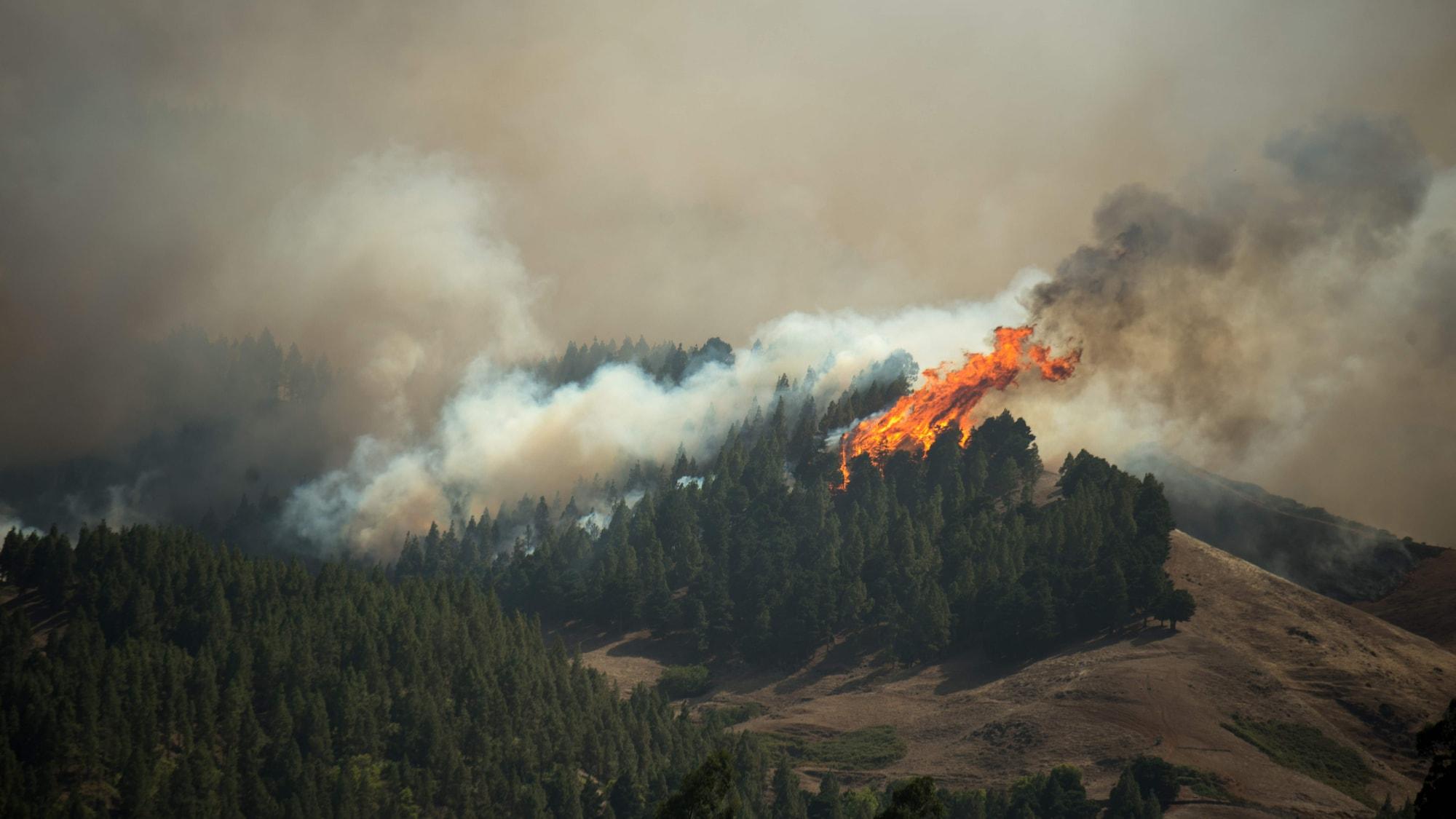 Erneuter Waldbrand auf Gran Canaria: 5000 Menschen aus Touristengebiet evakuiert