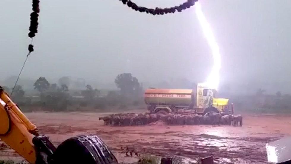 Indien: Schafe sterben wegen Blitzeinschlag