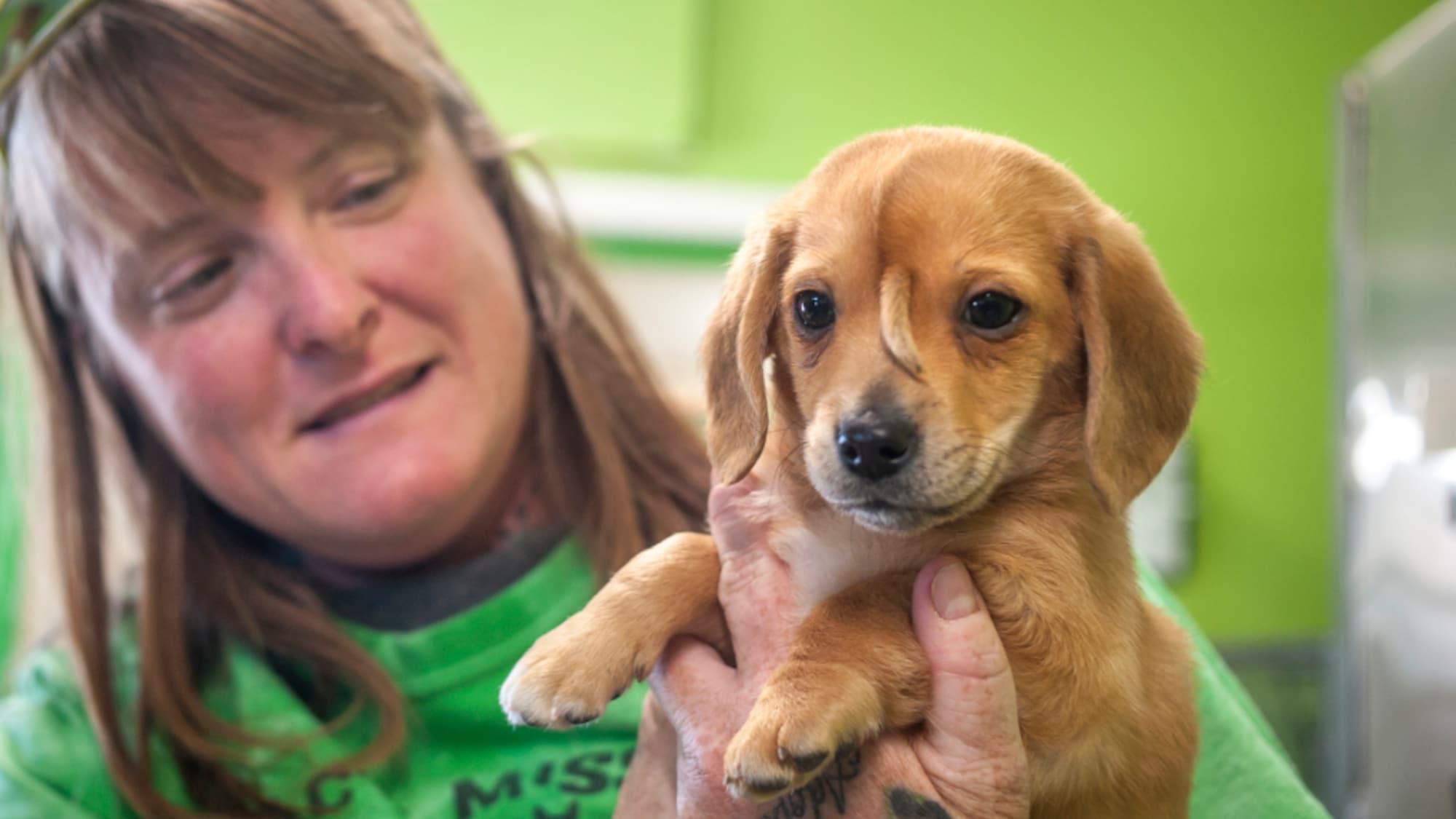 «Einhorn» Welpe Narwhal: Hundebaby mit einer Art Schwänzchen auf Stirn entdeckt