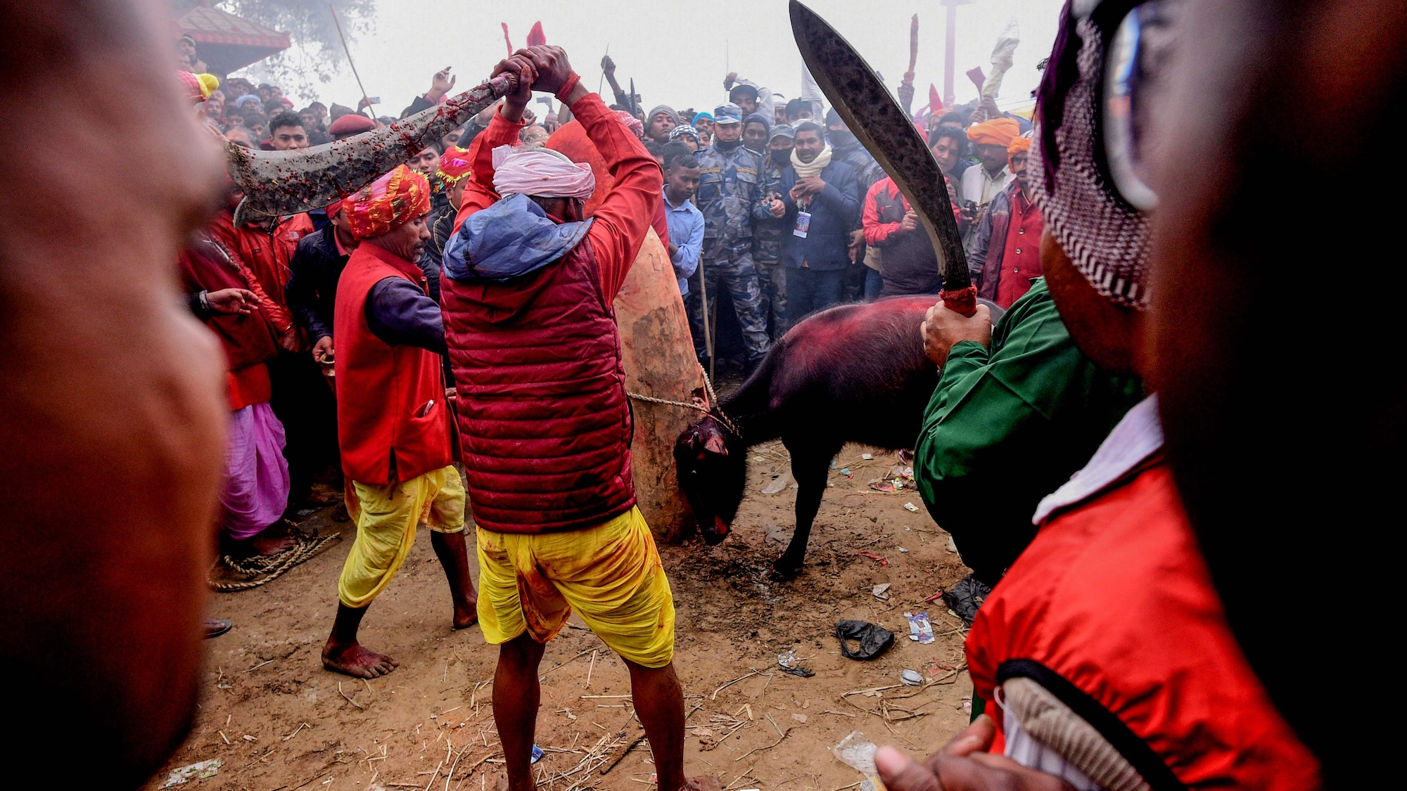 Opferfest in Nepal: Hindus metzeln Zehntausende Tiere mit Macheten nieder