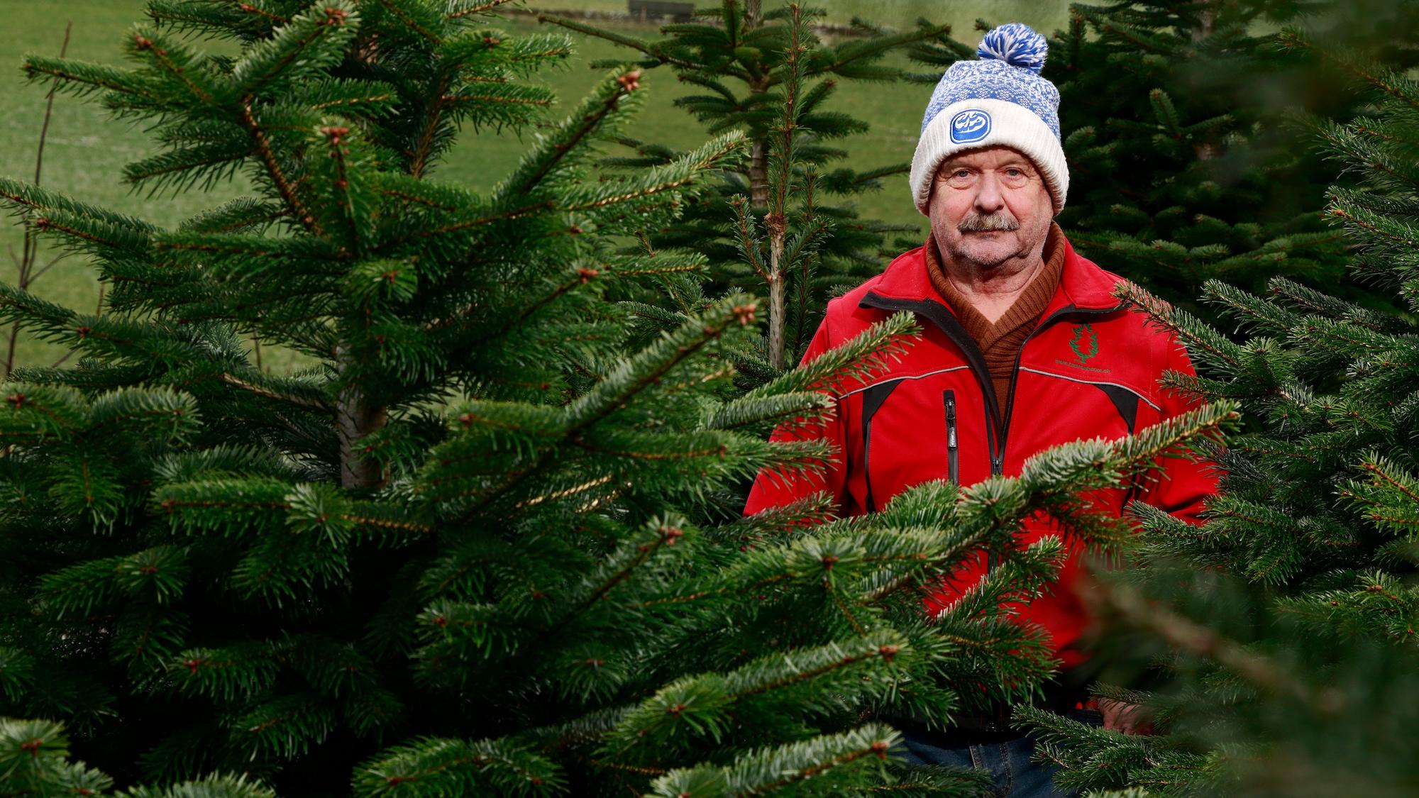 Coop will seine Tannen nicht mehr, weil sie zu wenig schön seien: Bauer Wälchli bleibt auf 400 Christbäumen sitzen