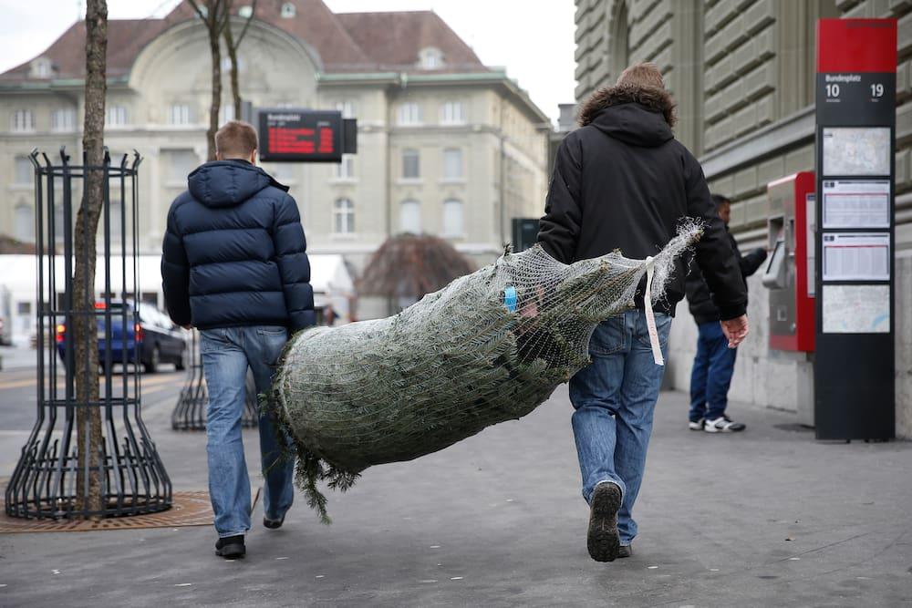 Luzern verbietet Verkauf von ausländischen Christbäumen