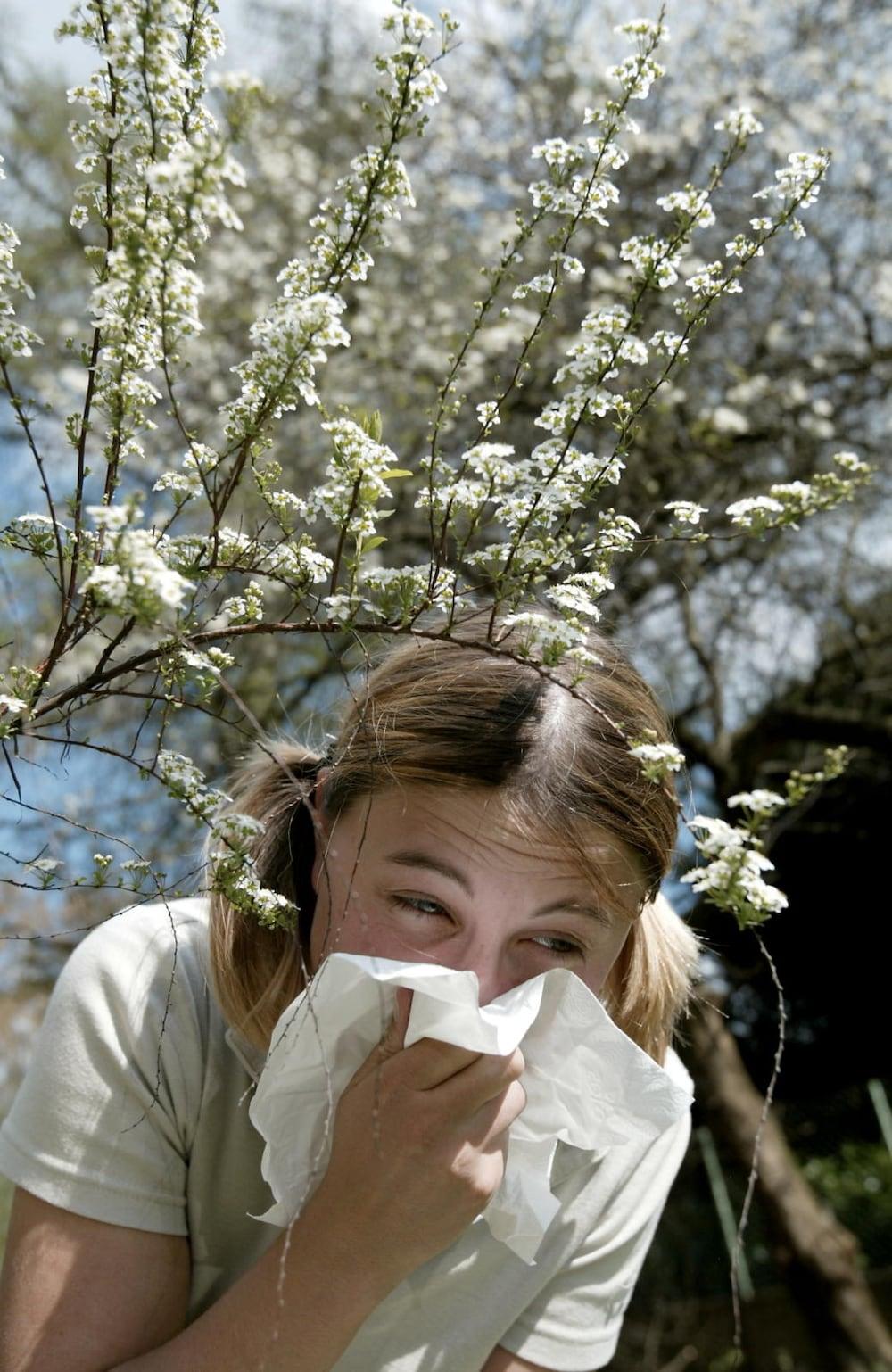pollen allergie bienen m cken im sommer was hilft dagegen. Black Bedroom Furniture Sets. Home Design Ideas