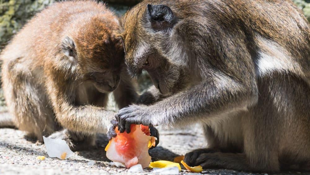 Zoo Der Trotzige Blick
