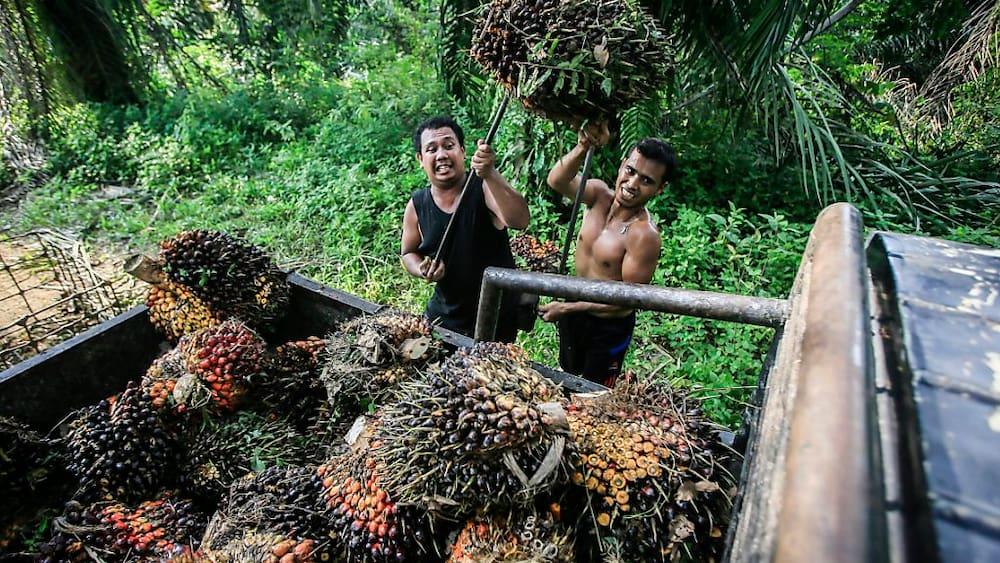 Trotz Palmöl: Breite Front für Abkommen mit Indonesien - Blick